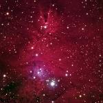 NGC2264 Christmas Tree Cluster HaRGB